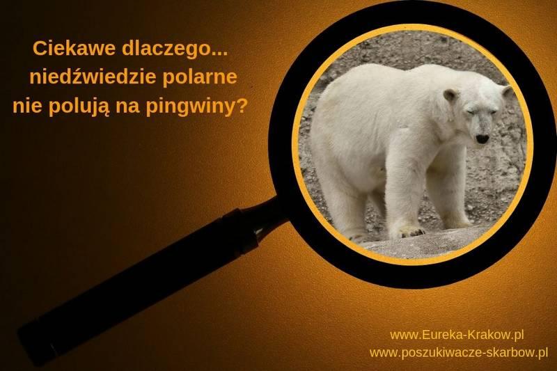 Jakiego koloru jest futro niedźwiedzia polarnego?